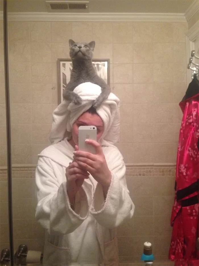 kitty perches on human head after shower