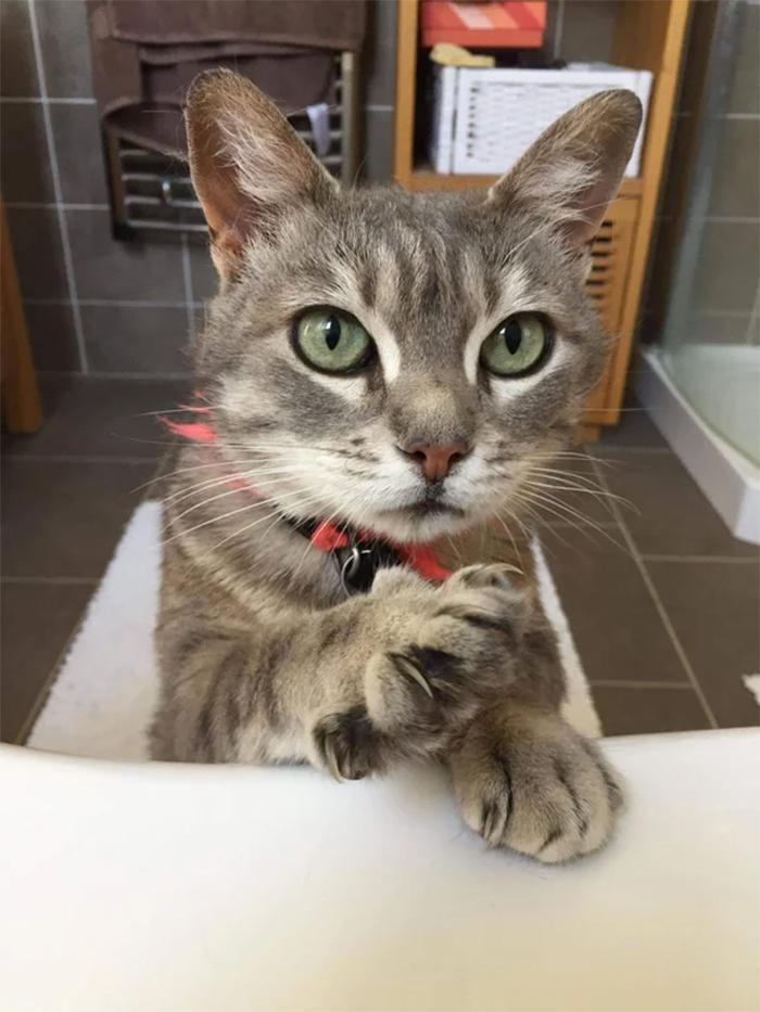 kitty pokes human in the bath tub