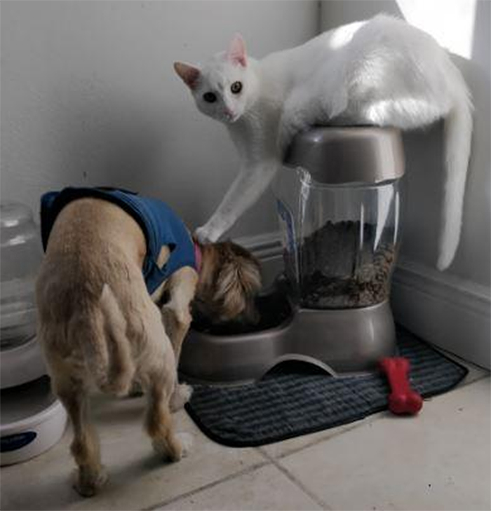 kitty pushing dog head into the food bowl
