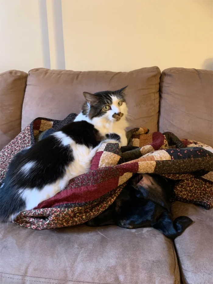 kitty tries to smother dog