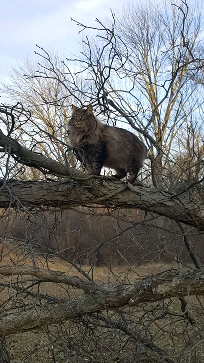 majestic kitty standing on a tree branch