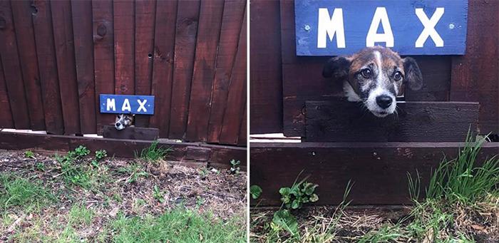 neighbor dog fence lookout