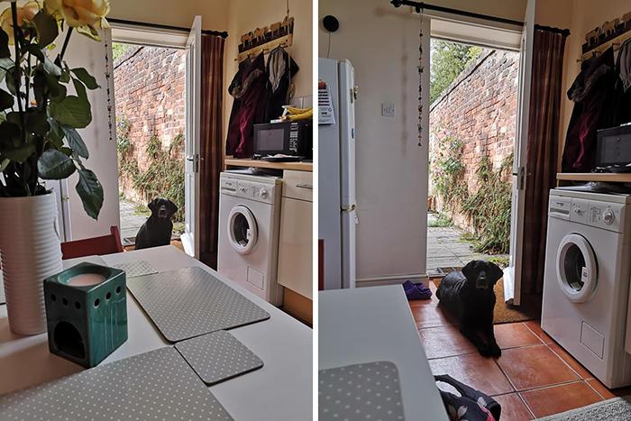 neighbor dog regular visits