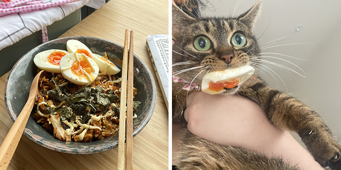 pet cat stealing egg from rice bowl