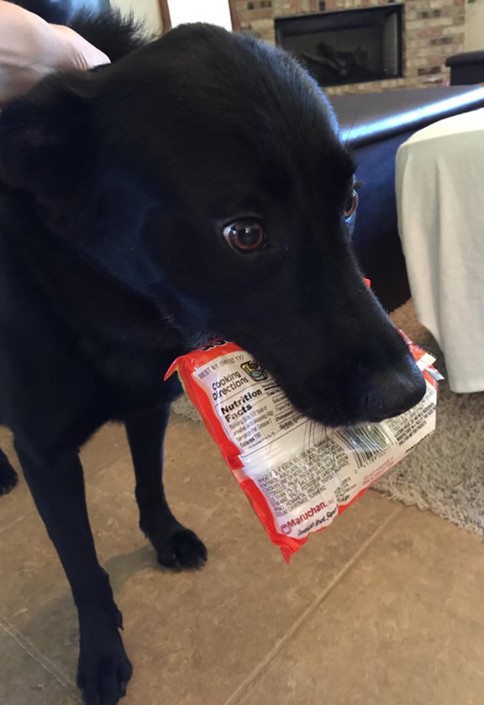 pet dog stealing food from pantry