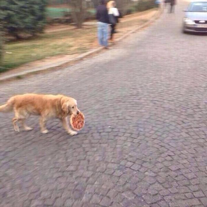 pet dog stealing food