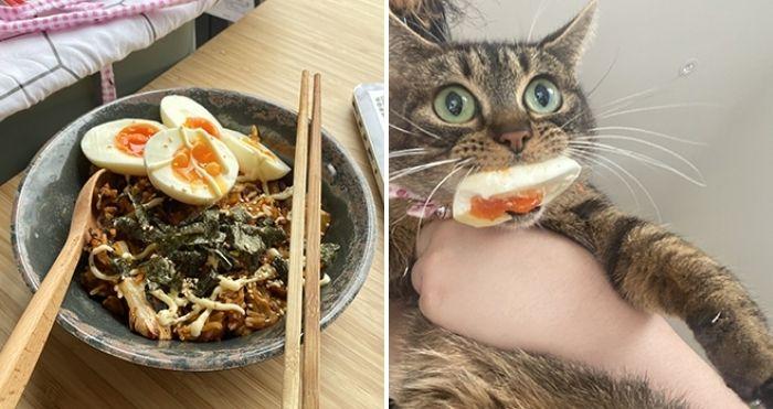 pets stealing food