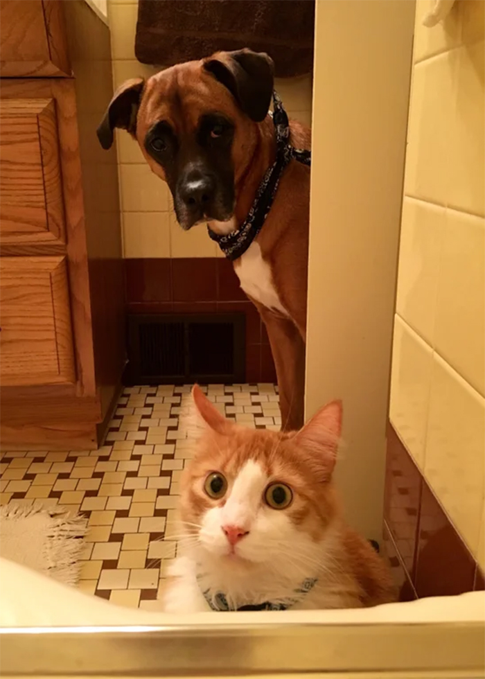 pets watching over owner bubble bath