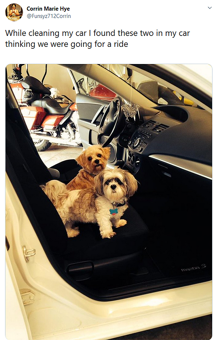 pooches think they are going for a ride