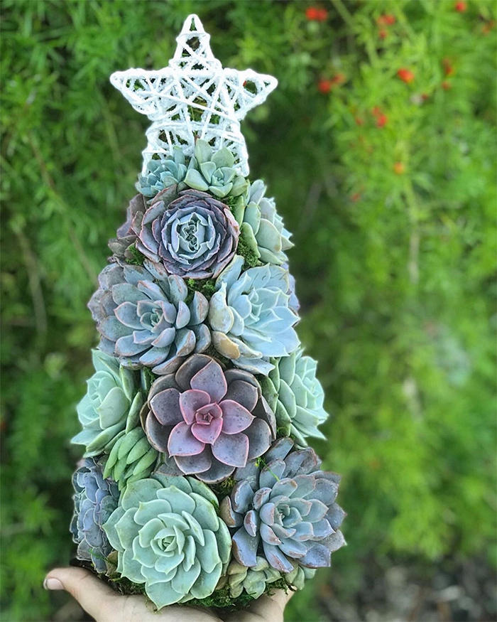 People Have Been Using Succulents To Create Christmas ...