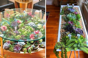 succulent table gardens