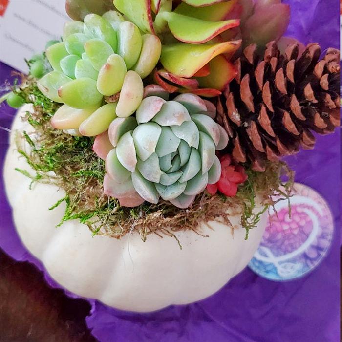 succulent-topped white fairytale pumpkin