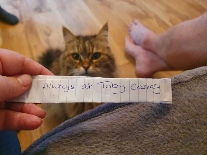 the note exposed the secret life of Tula the Siberian Cat