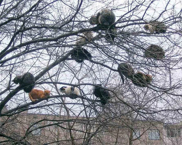 tree blossoming cats