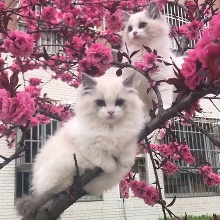two cats sitting in a japanese plum tree
