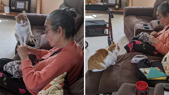 wholesome pics grandma fixes cat toy