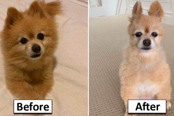 Dog grooming Fails
