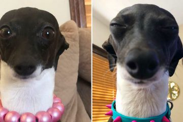 Funny dog expressions