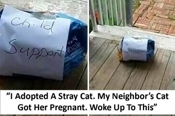 Funny neighbors