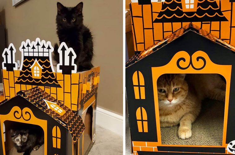 Haunted Cat Houses