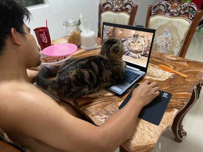 Jarvis the cat admires his picture on his fur-dad's laptop