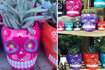 Sugar Skull Succulents