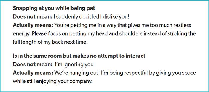 cat body language explanation