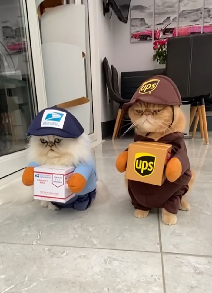 cat halloween costumes package deliverers
