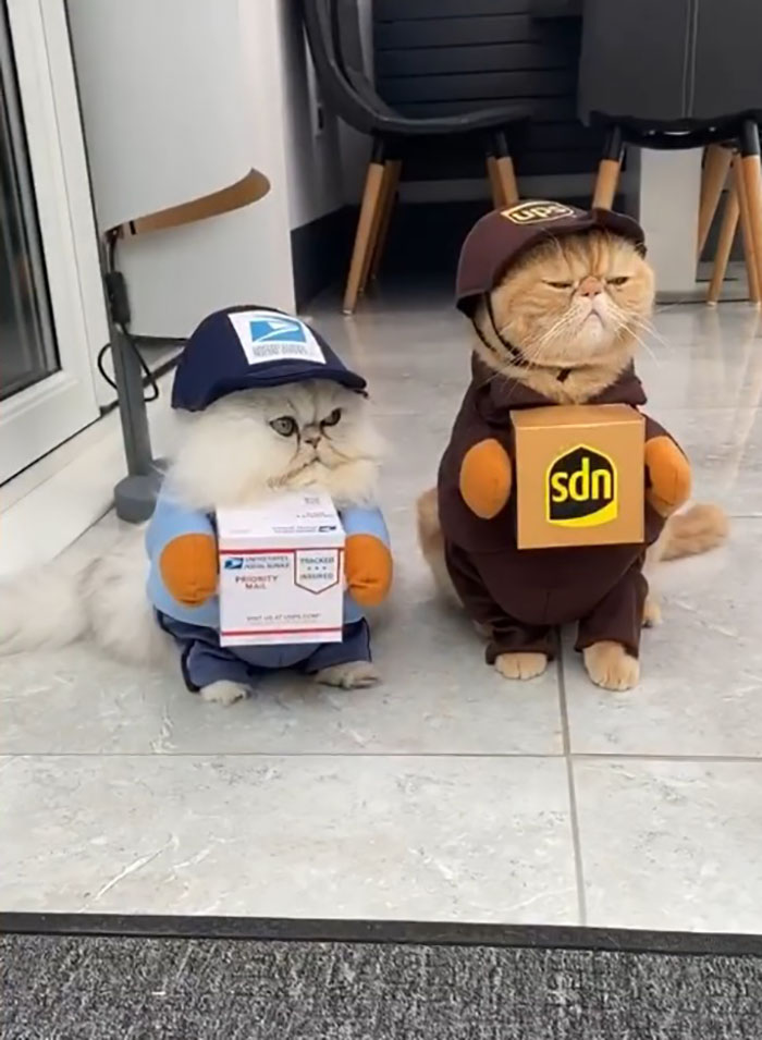 cats in package deliverer outfits