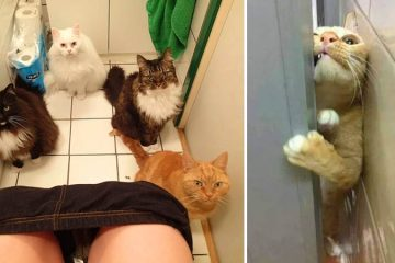 cats invading personal space