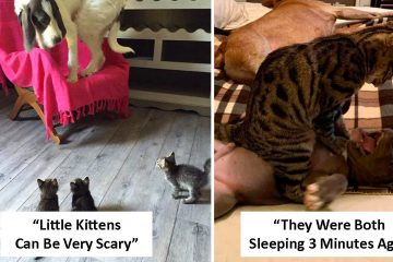 cats scaring dogs