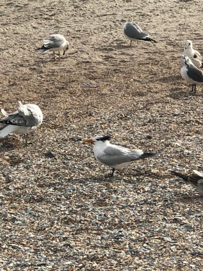 danny-devito-bird-jolteona