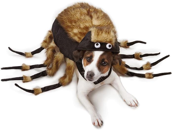 dog dressed like a tarantula