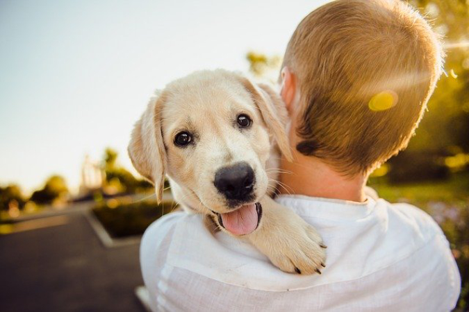dog heart rates leap when they hear their owners say i love you