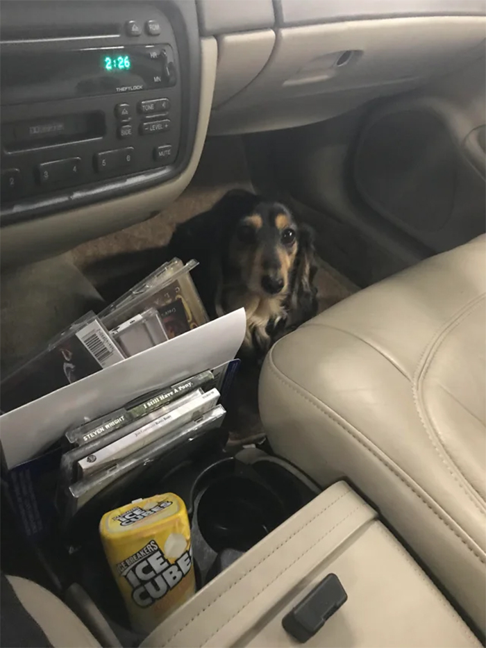 dog helps technician check codes in car