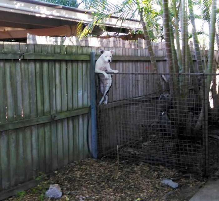 dog leaning over the fence