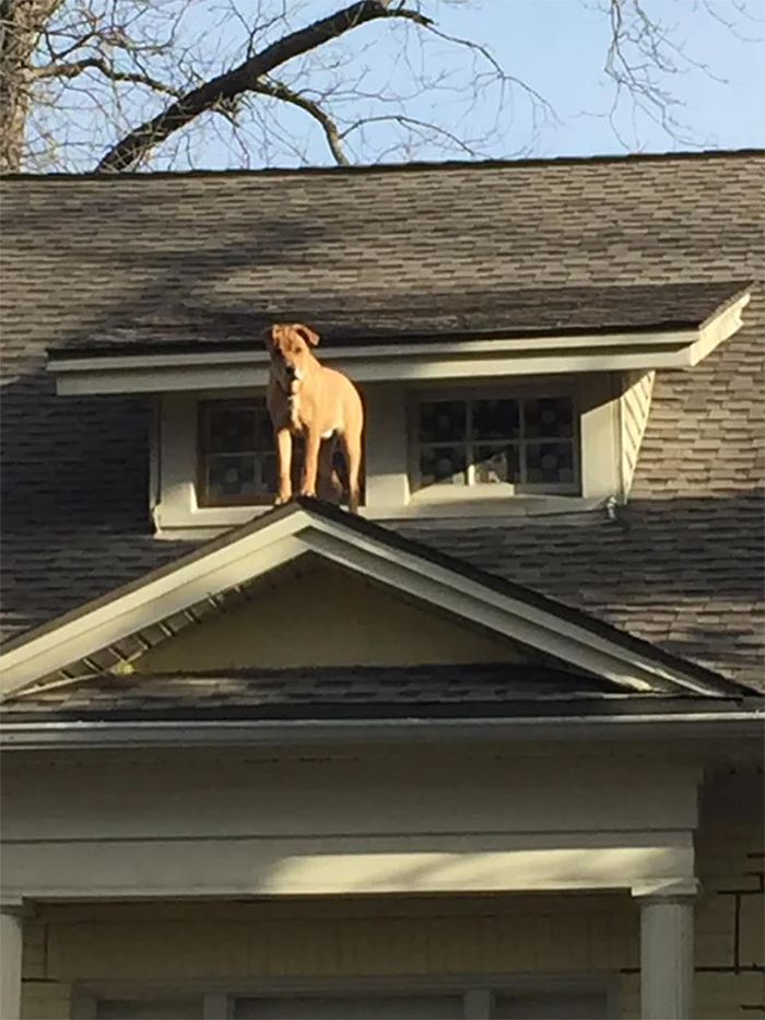 dog on roof top