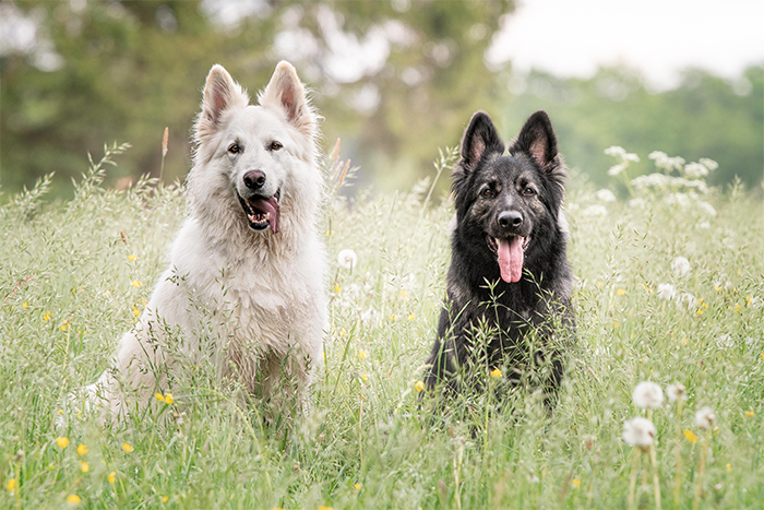 dogs liam and nimue