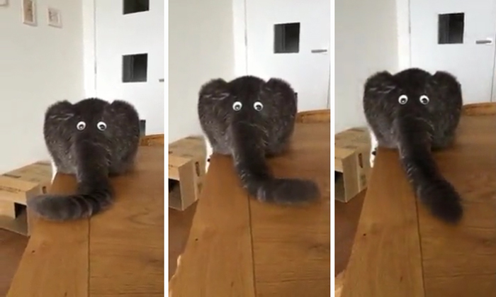 elephant or cat