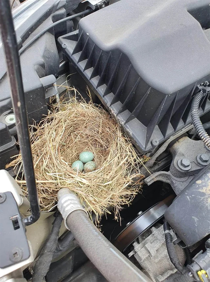 funny mechanics stories bird nest with eggs in engine bay