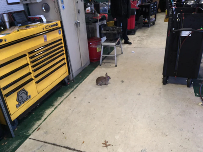 funny mechanics stories rabbit hopped into the shop