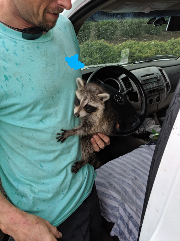 funny mechanics stories raccoon in the truck