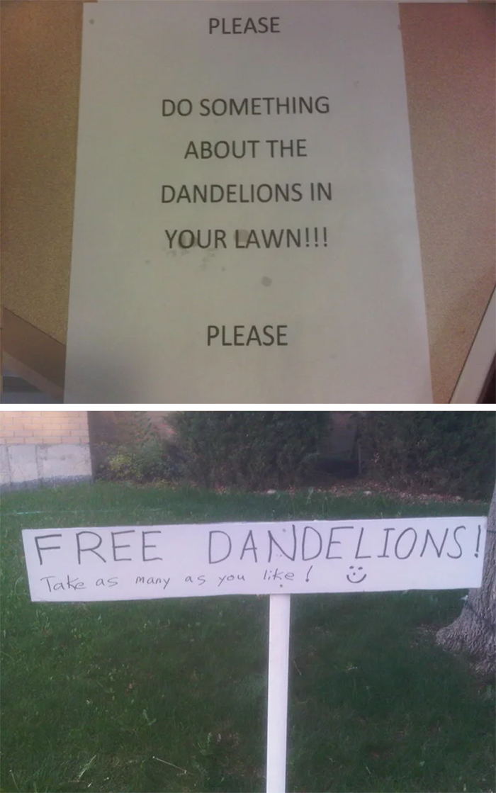 funny neighbours dandelion problem solved