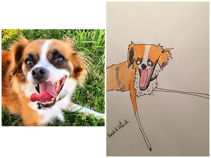 funny pet portraits bandit