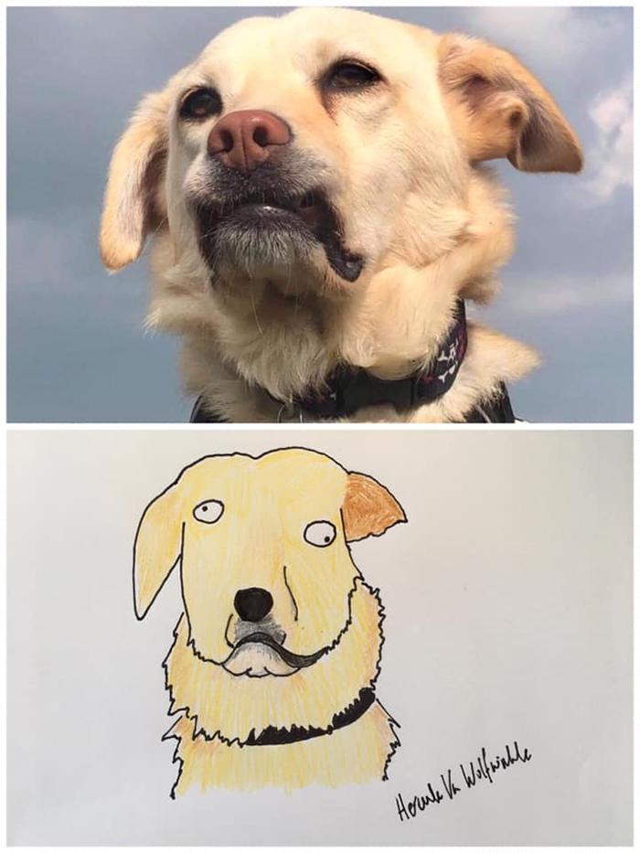 funny pet portraits cassie moo