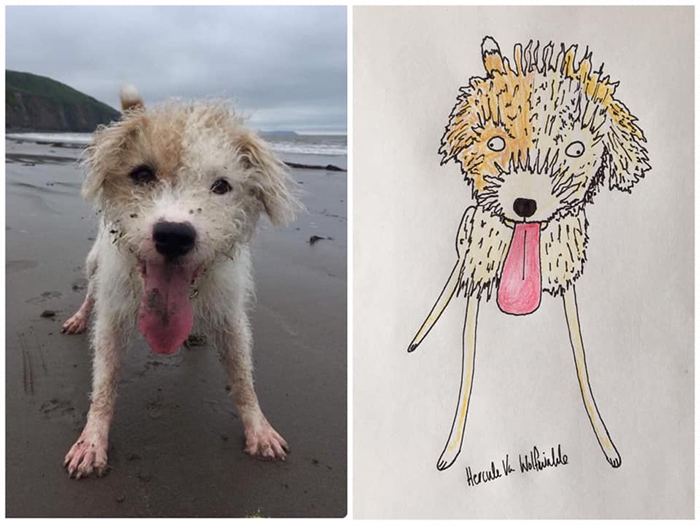 funny pet portraits curly stokoe