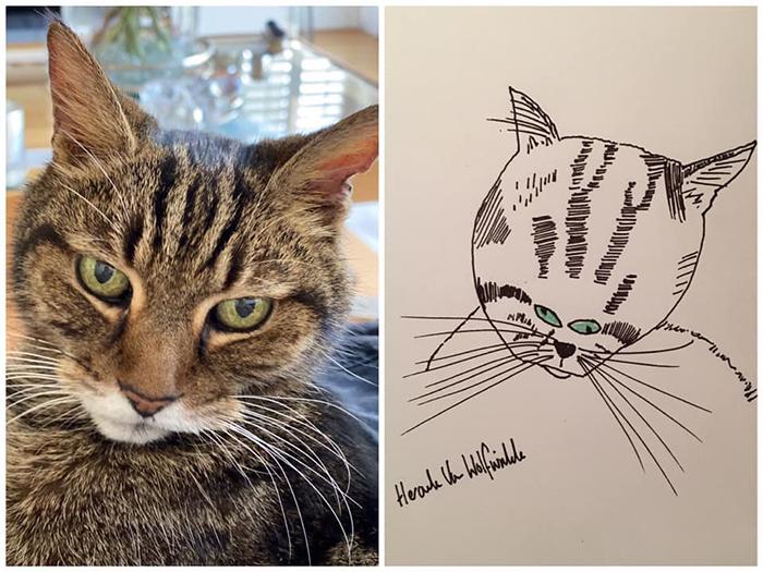 funny pet portraits donald the cat