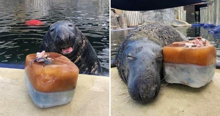 giant ice fish cake