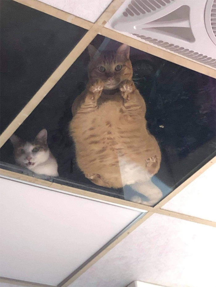 glass ceiling cats
