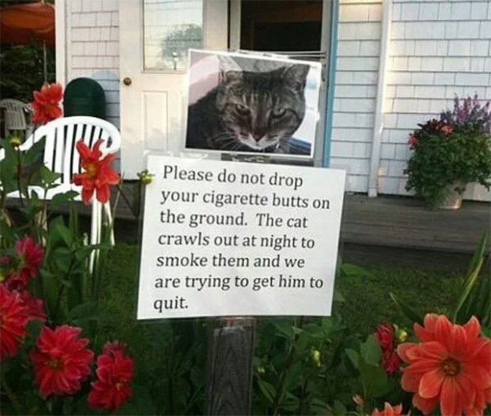 hilarious warning sign cat bad habit
